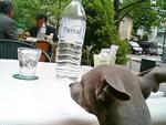 各テーブルにボトルで置いてあるミネラルウォーター