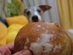 Kartoffel食べる?